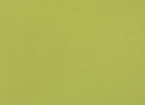 B9690 Kiwi