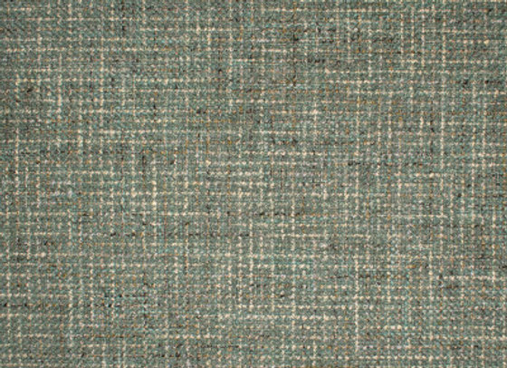 S1467 Lichen