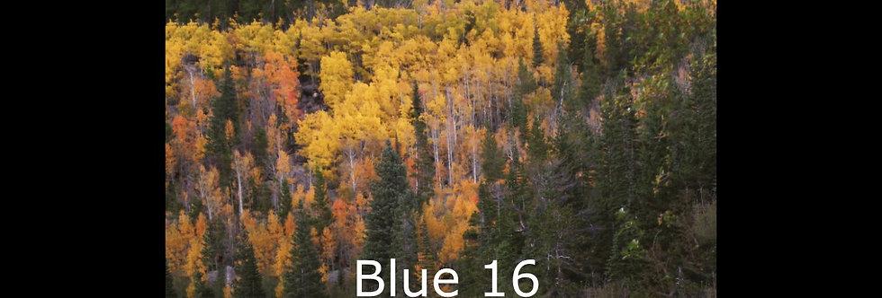 Blue 16 (score & parts)