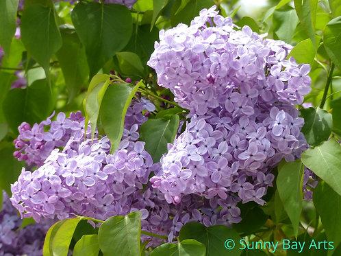 Spring Season 2 - Photo Greeting Cards
