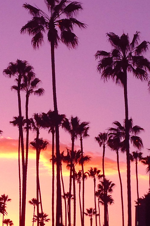 Palm Trees at Sunset / Wilshire Blvd. / 5:25pm