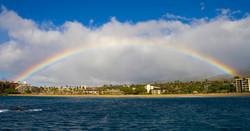 rainbow whale photobomb