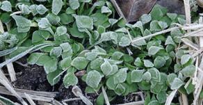 Winter Wunder Gemüse