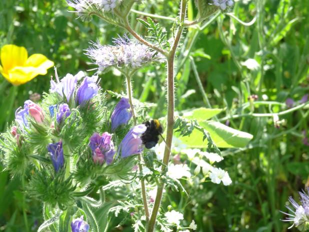 Bienenwiese.JPG