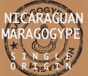 NICARAGUAN MARAGOGYPE