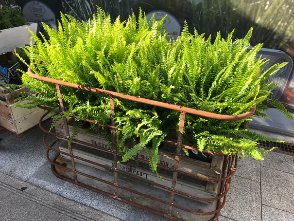 Choix de plantes à la boutique