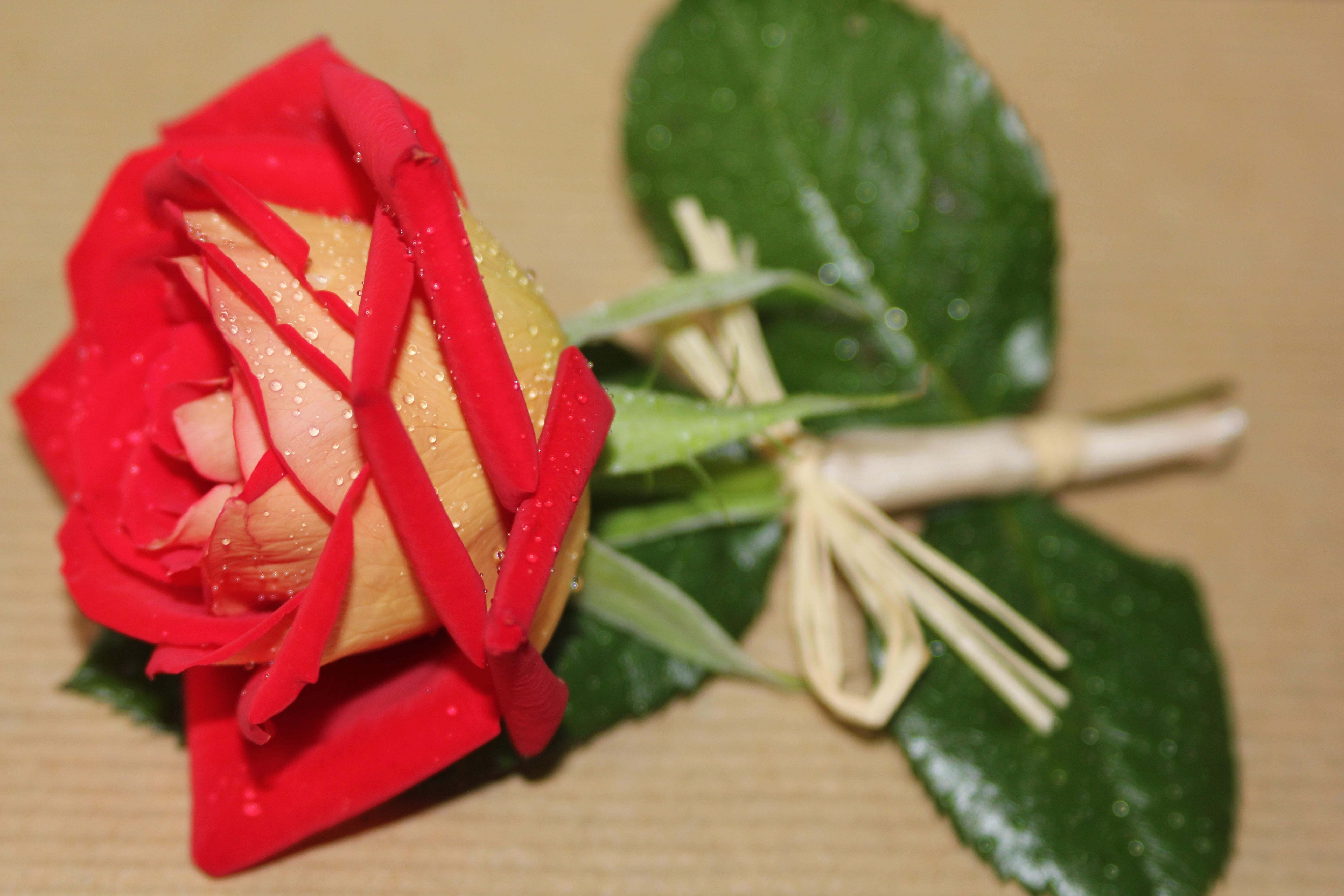 Boutonnière rouge