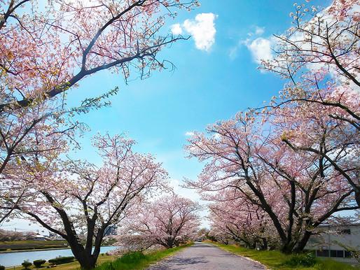 春の絶景 撮影スポット|三重県北勢地域編/奈良県もあるよ