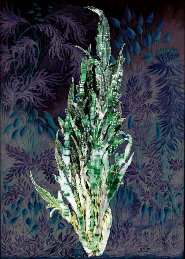 Amalgamated Fragmentation / Plastisphere-Plant 1