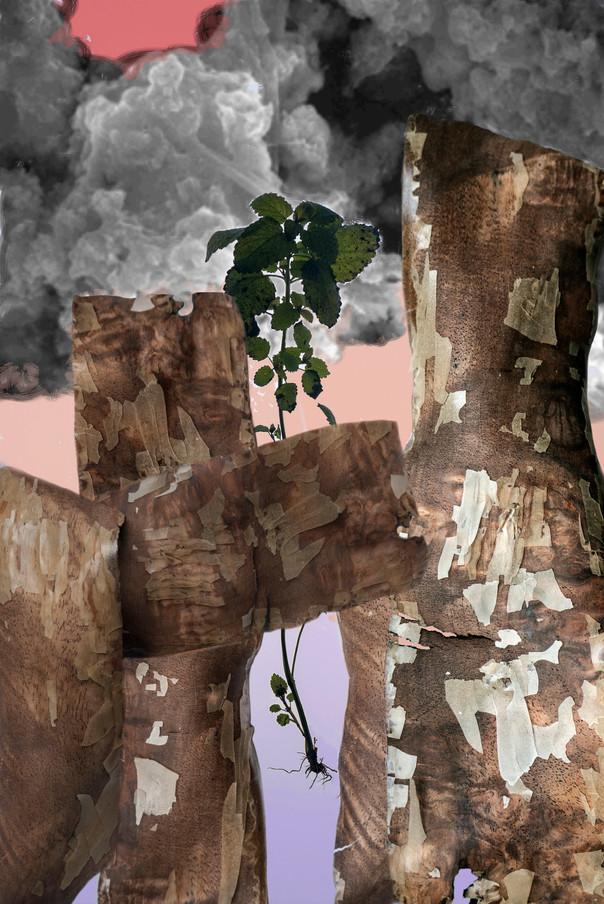Amalgamated Fragmentation/Plastisphere-Plant 2