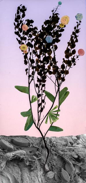 Amalgamated Fragmentation/Plastisphere-Plant 3