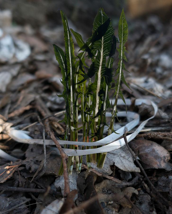 Amalgamated Fragmentation/Plastisphere-Plant 6