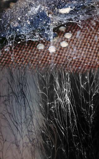 Amalgamated Fragmentations / Invasion 5