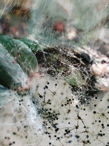 Amalgamated Fragmentations / Invasion 12