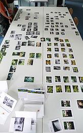 florence iff, Bildbesprechung, Portfolio, Präsentation, Coaching, Webseite erstellen, website,