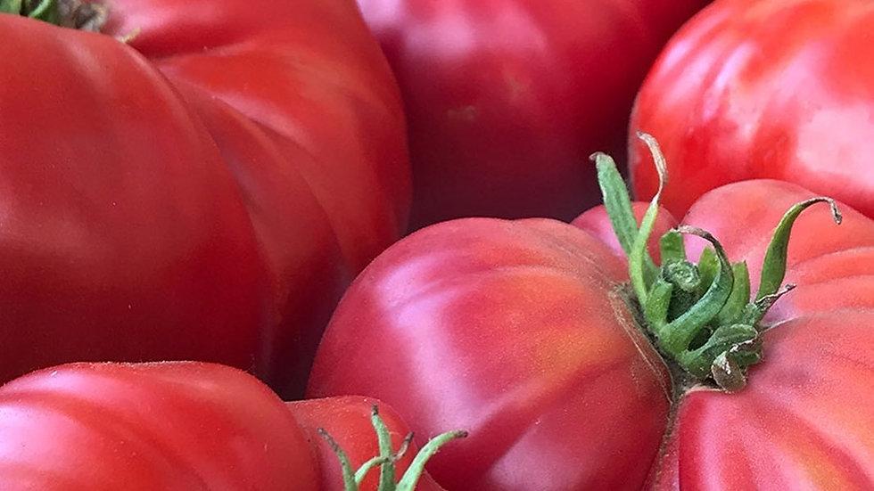 Sudduth Strain Brandywine Tomato