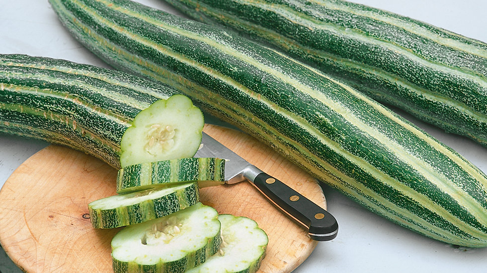 Armenian Striped Cucumber (4 pack)