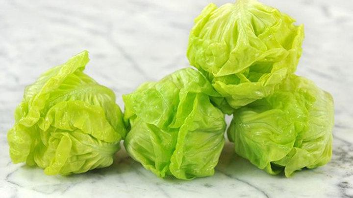 Lettuce - Tennis Ball (6 pack)