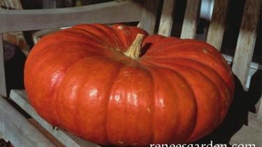 Cinderella's Carriage Pumpkin (4 pack)