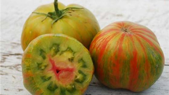 Berkeley Tie-Dye Green Tomato