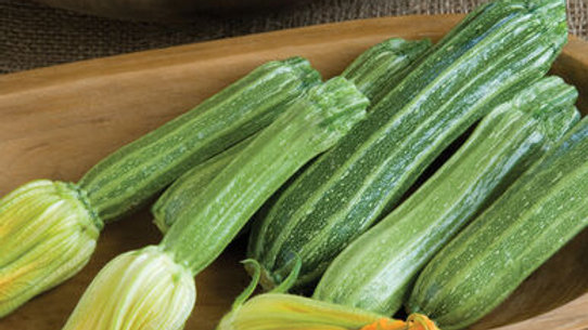 Costata Romanesco Zucchini (4 pack)