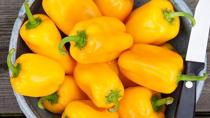 Yellow Picnic Sweet Pepper