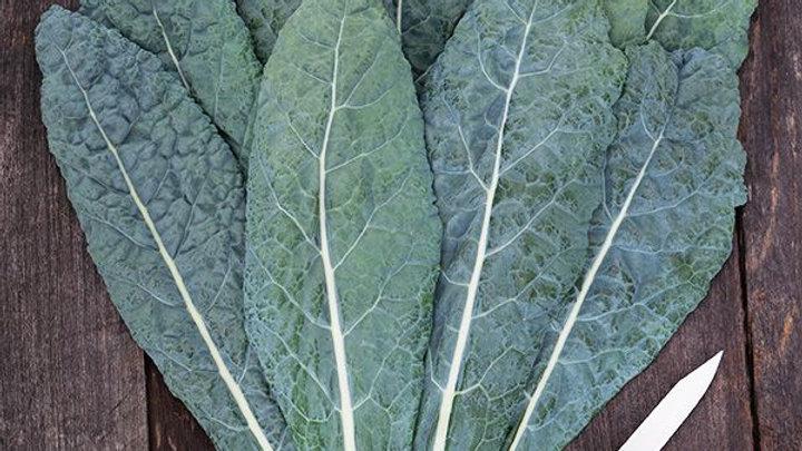 "Kale - Lacinato ""Dinosaur"" (6 pack)"