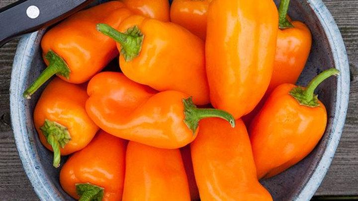 Orange Picnic Sweet Pepper