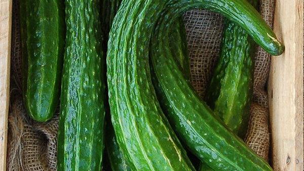 Suyo Long Cucumber (4 pack)