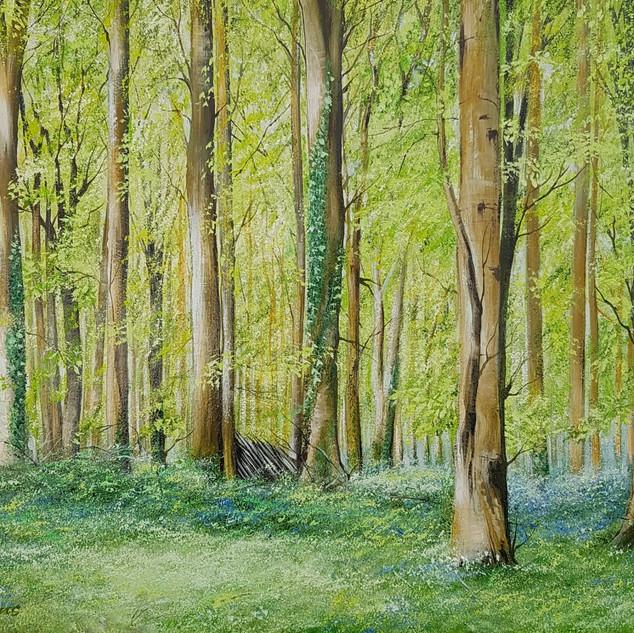 Bluebell Forest, Arundel