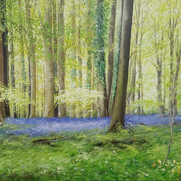 Bluebell Woods, Arundel