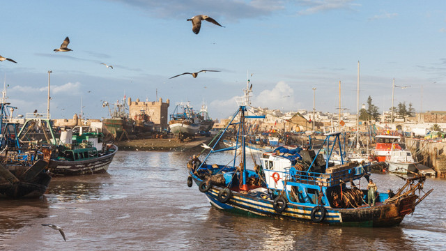 A fishing boat returns to Essaouira harbour