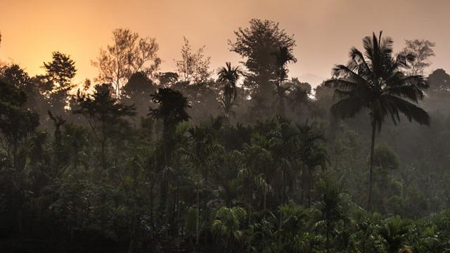 Jungle sunrise