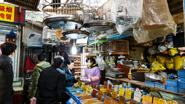 Pet and seed market