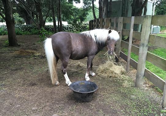Horses at Farmyard Preschool