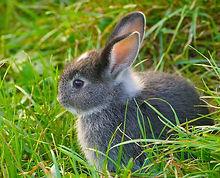 Rabbits at Farmyard Preschool