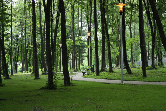 Projekt zieleni w parku miejskim w Kazimierzy Wielkiej