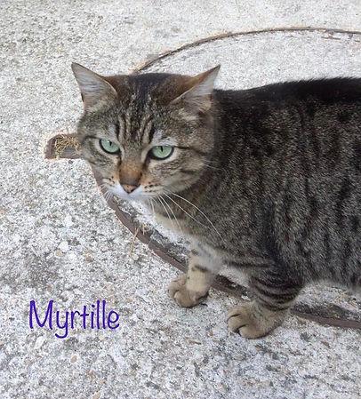 Myrtille2.jpg