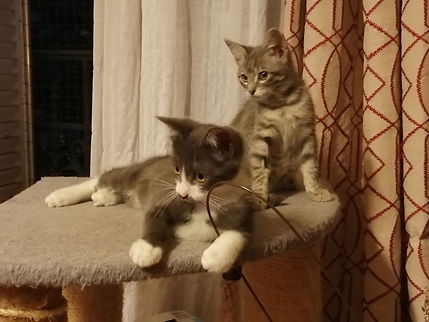 Django et Billie.jpg