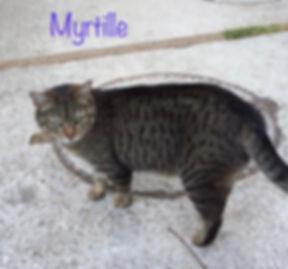Myrtille1.jpg