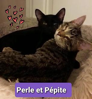 Perle et Pepitte.jpg