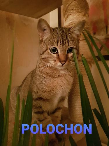 Pelochon1.jpg