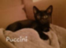Puccini1.jpg