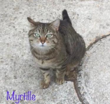 Myrtille.jpg