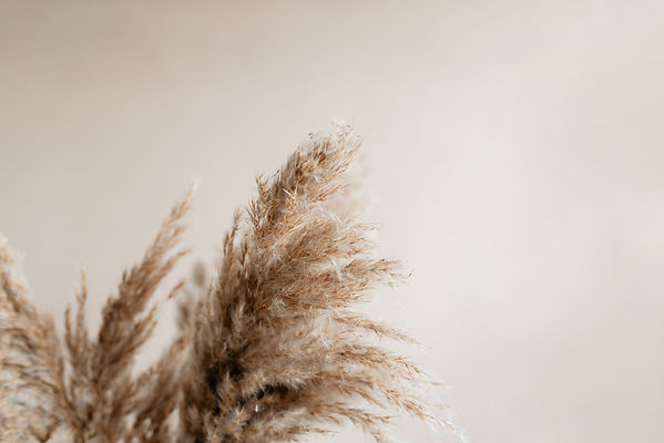 Pampas grass against pecan wall..jpg