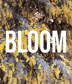 the-bloom-stage-webs.jpg