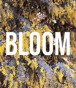Bloom Stage