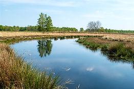 Natuurfoto Bargerveen