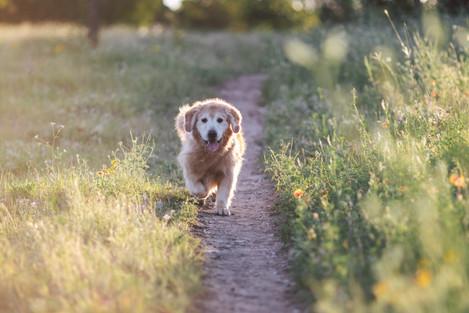 Old pups-6.jpg