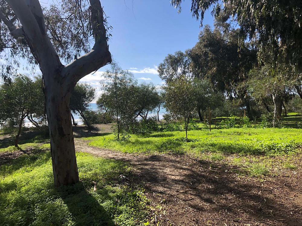 Dasoudi park, Limassol